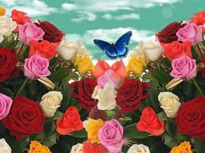 Топ 10 саженцев роз